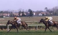 Courses de chevaux (1400 av. J.C.) 1