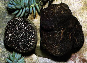 Culture de la truffe (1814) 6
