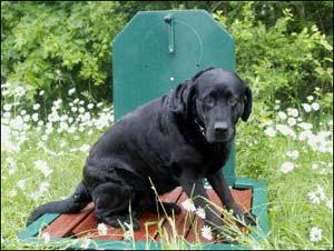 Toilettes publiques pour chiens 6