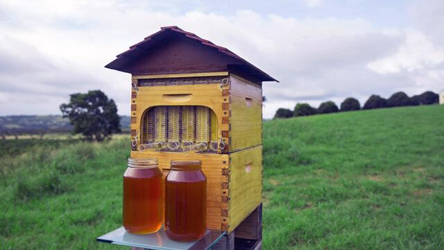 Ruche Flow Hive : récolte de miel au robinet 4