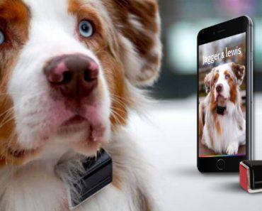 Collier intelligent pour chien Jagger & Lewis 2