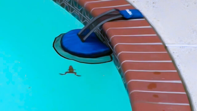 froglog bou e de sauvetage pour les petits animaux tomb s dans une piscine eurekaweb new. Black Bedroom Furniture Sets. Home Design Ideas