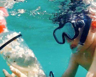 BabaPlaya : attrapez des poissons en snorkeling, puis relâchez-les 2