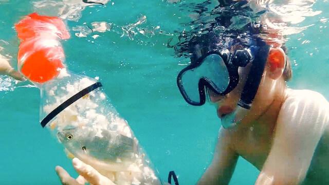 BabaPlaya : attrapez des poissons en snorkeling, puis relâchez-les 1