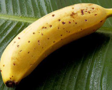 Mongee : la banane sans peau qui vient du froid 5