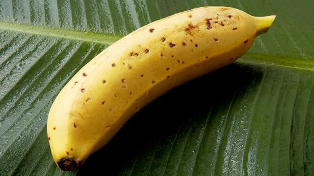 Mongee : la banane sans peau qui vient du froid 1