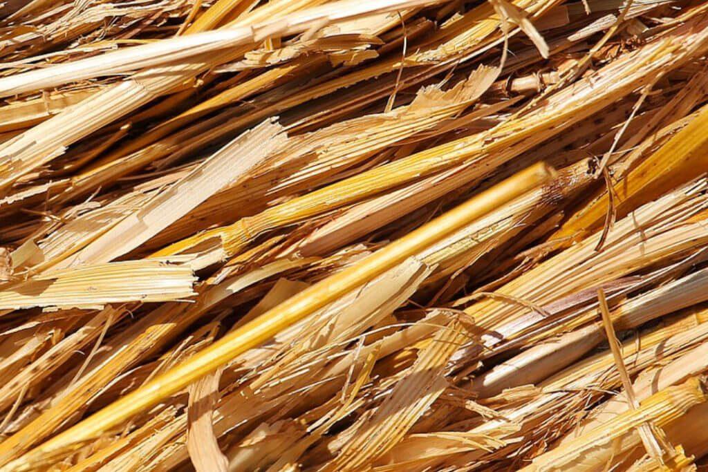 Des tiges de blé, alternative écologique