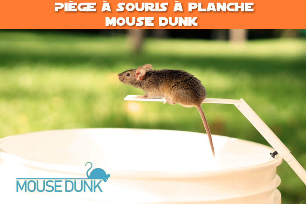 piege a souris a planche mouse dunk